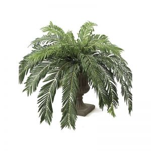 5' Cycas Palm Cluster - Green|Indoor