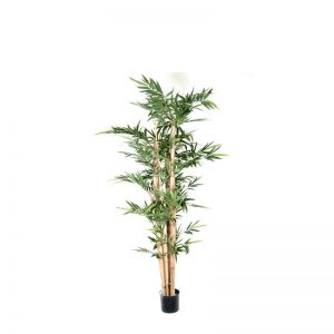 7' or 8' Potted Giant Bamboo Pole Tree