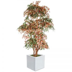 UV Rated Japanese Maple Tree with Natural Trunk