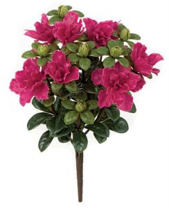 14in. Tall Pink/Beauty Azalea Bush