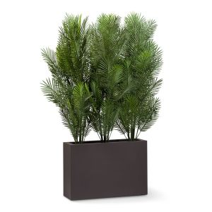 Areca Palm Tree Shrub Dividers, Outdoor