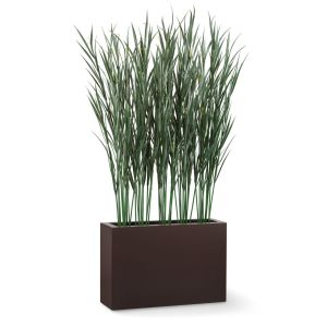 Pampas Grass Shrub Dividers, Outdoor