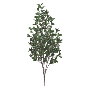 48in. Cherry Laurel Bush, Outdoor