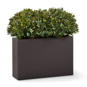 Rhododendron Shrub Dividers, Outdoor