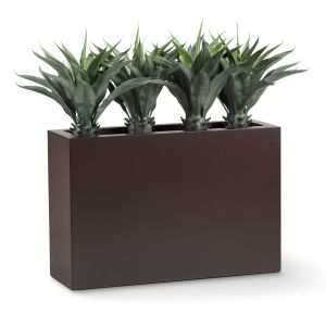 Agave Macroacantha Shrub Dividers, Outdoor