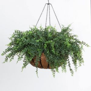 Buckler Fern in 22in Hanging Basket, Outdoor Rated