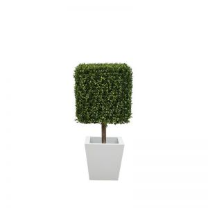 45in.H Duraleaf Boxwood Topiary Cube Tree in Custom Fiberglass Planter, Outdoor Rated
