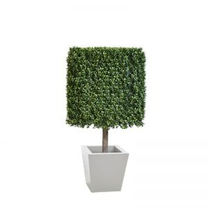 Duraleaf Boxwood Topiary Cube in Modern Planter, Outdoor