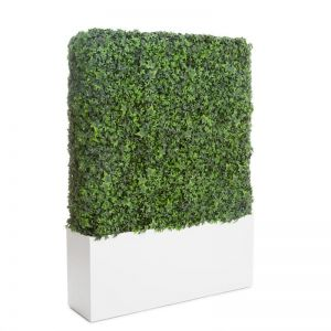 English Ivy Hedges in Modern Fiberglass Planter, Fire Retardant