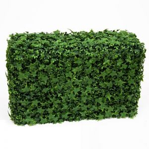 English Ivy Hedges, Fire Retardant