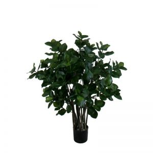 3' or 5' Golden Laurel Shrub