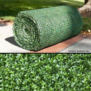 Japanese Boxwood Rolls, Outdoor