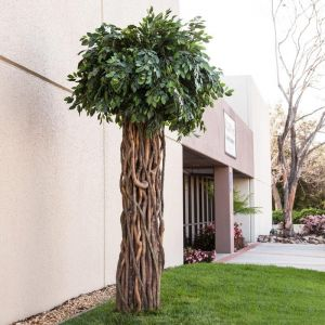 Inherently Fire Retardant Rated Banyan Tree