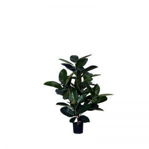 3', 4' or 6' Multi Trunk Rubber Plant