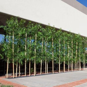 6'L Bamboo Artificial Outdoor Grove- Three Heights Available!