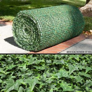 English Ivy Rolls, Outdoor