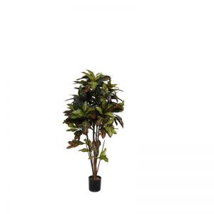 8' Potted Croton Tree
