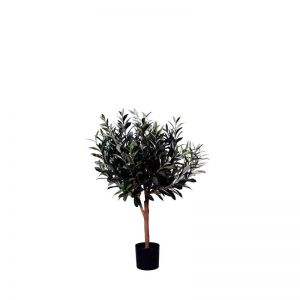 2' Potted Olive Tree w/o Olive