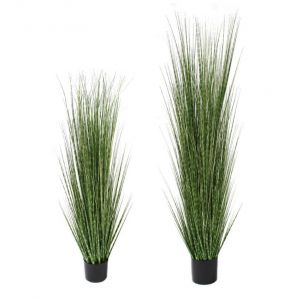 4' or 6' Spotted Green Onion Grass