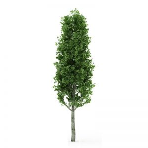 UV Rated Poplar Tree with Natural Trunk