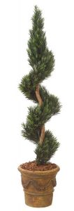 6' Podocarpus Spiral Topiary - Outdoor