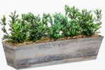"16"" Boxwood Bush"