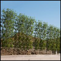 Artificial Bamboo Privacy Screen