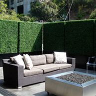 Outdoor privacy hedges