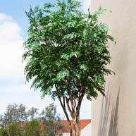 UV rated outdoor trees